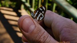 Motýle pri brazílsko-argentínskych vodopádoch