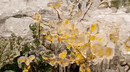 Zamrznutá príroda