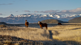 V parku žijú kone vo voľnej prírode