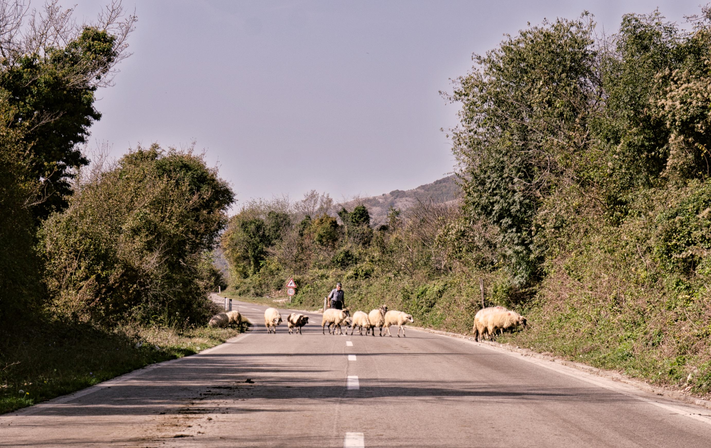 Pastier s ovcami