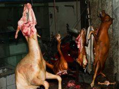 Čína, to je aj zabíjanie a predaj psov priamo na trhu