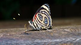 Vítajú nás i húfy motýľov