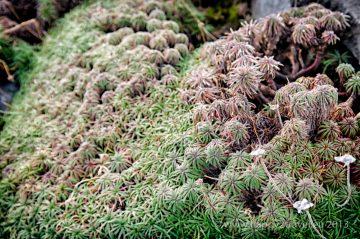 Mach a tráva je najčastejšia flóra súostrovia
