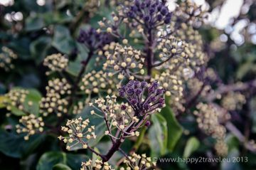 Kvety Aranského súostrovia