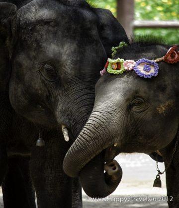 V slonej nemocnici