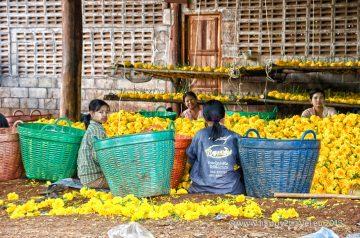 Vykorisťované barmské nádenníčky pomáhajú vytvárať imidž Thajska zasypaného kvetmi