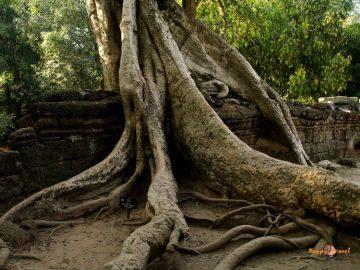 Svätyňa Ta Prohm v komplexe Angkor Wat, Kambodža.