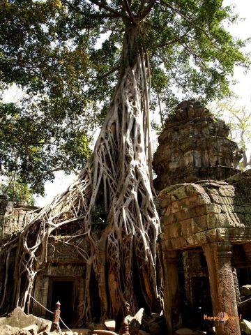 Svätyňa Ta Prohm v Angkor Wat, Kambodža. Pohľady, ktoré vyrážajú dych