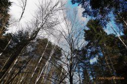 V hlbokých lesoch Svätokrížskych hôr
