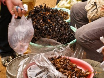 Kambodžská pochúťka: vyprážané tarantule a vyprážané včely