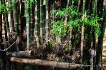 Bambusové zátišie