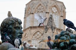 Valencia, staré mesto