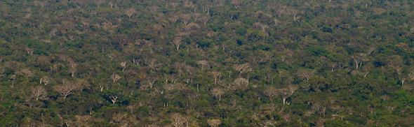 BolĂvijskĂĄ Amazonka - prales nĂĄrodnĂŠho parku